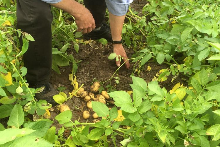 Kuerbis-u-Kartoffel2-2015